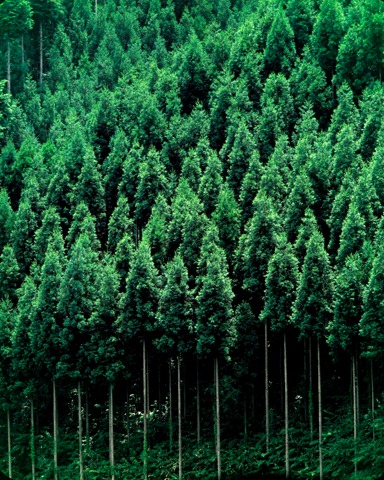 treesforlife1