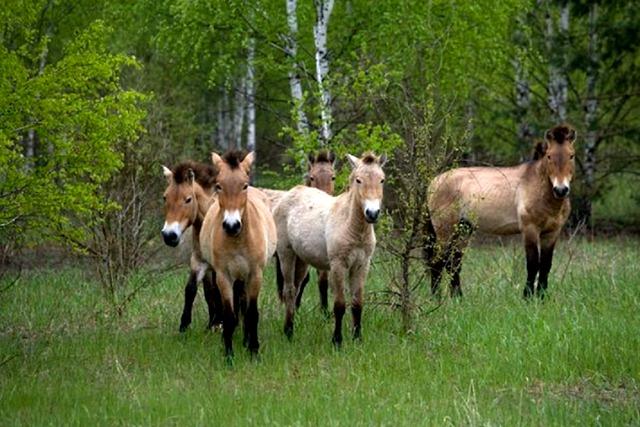 horses roam