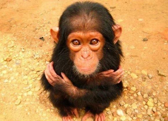 monkeyhug